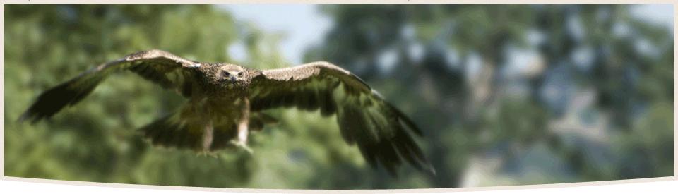 endangered-species-law