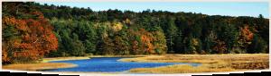 mitigation-conservation