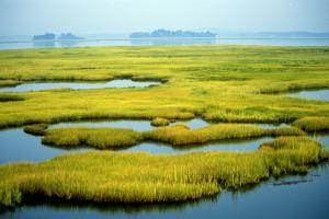 wetlands_usfws