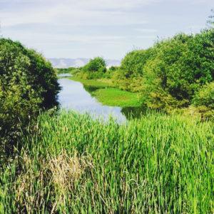 wetland_photo_ams